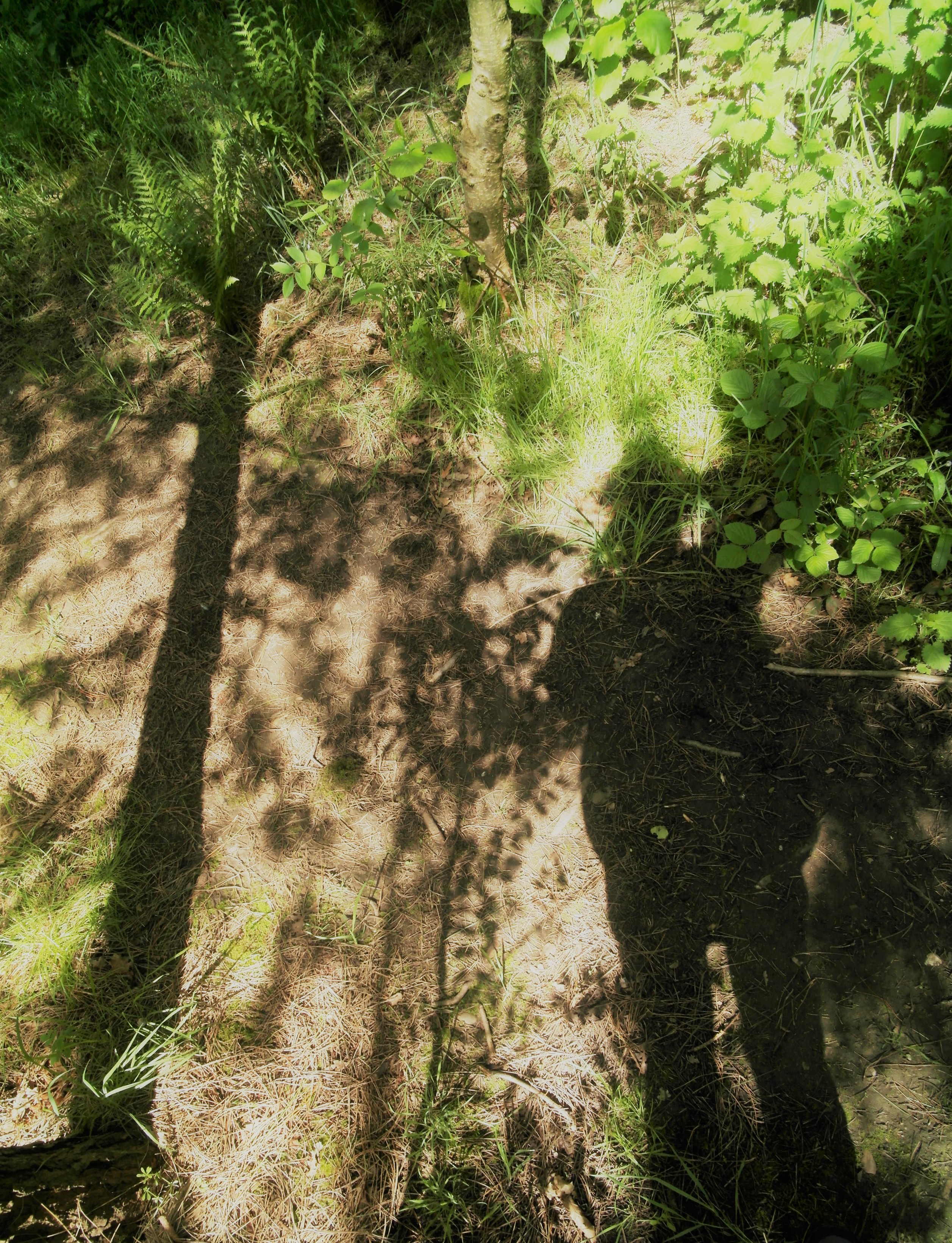 misterkaki out walking in England's National Forest