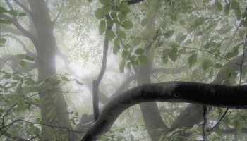 Image result for blackwater woods